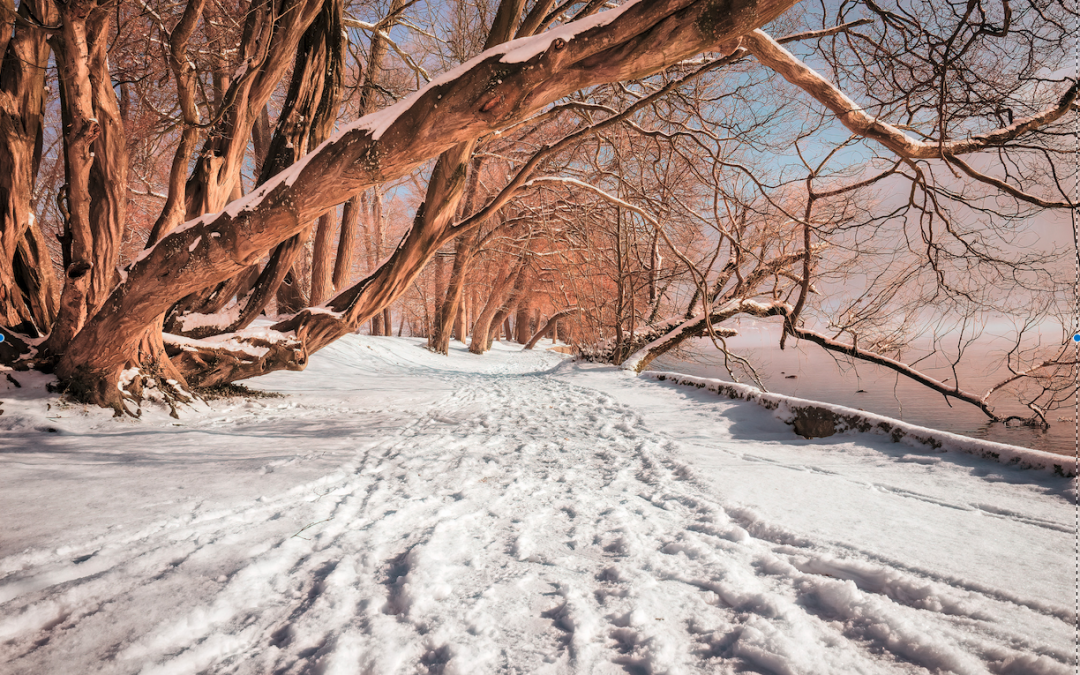 Winter Survival Tip #3 – Keep Moving and Get Outdoors!